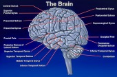 brain image healthtips images