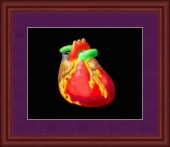 heart colored image healthtips images